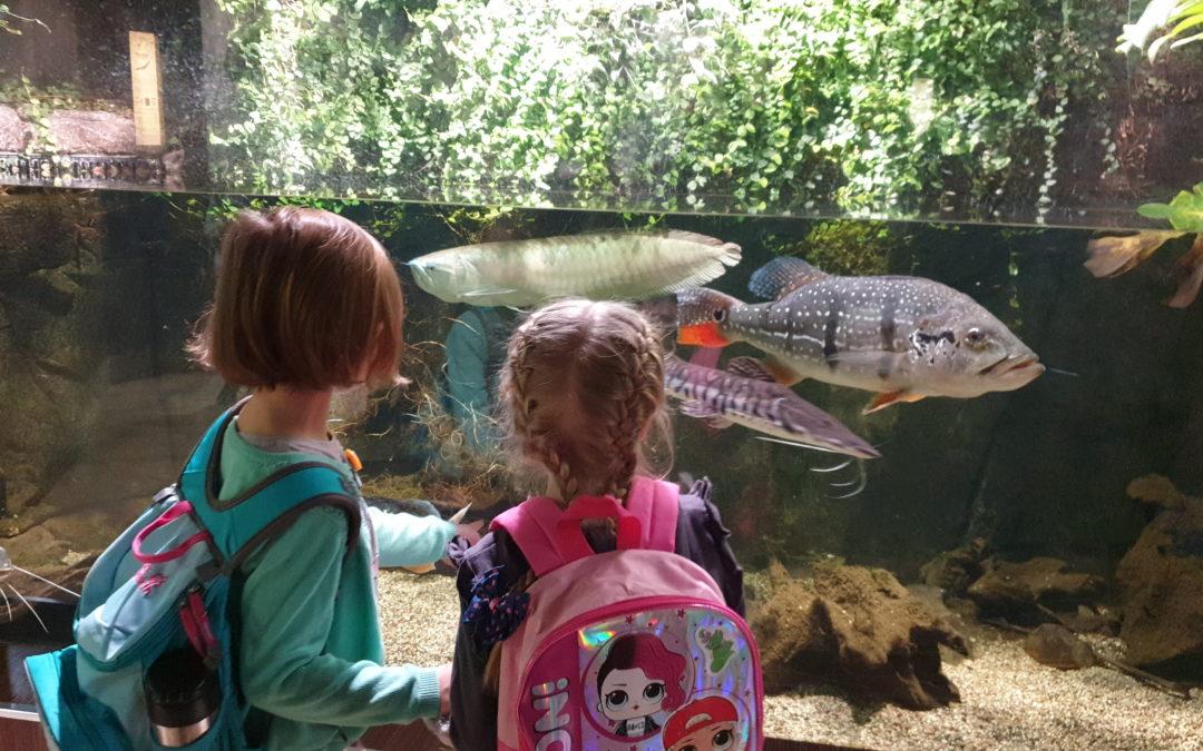 Ferie Zimowe – Gdyńskie Akwarium