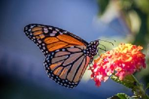 """Podsumowanie konkursu plastycznego """"Motyle, motylki, motyleczki"""""""