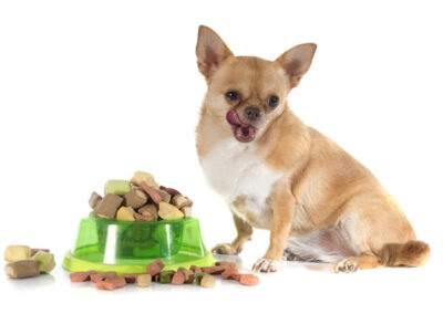 dry pet food and fat chihuahua