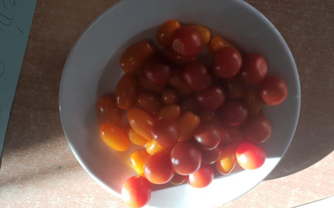 Dzień pomidorków koktajlowych w świetlicy szkolnej.