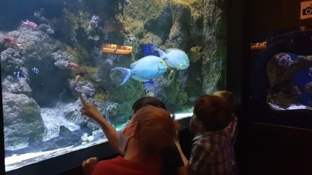 Zwiedzanie Akwarium Gdyńskiego 1A